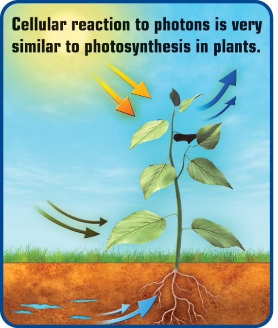 Laser-photosynthesis